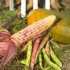 Un épi de maïs, une courge et des fèves.