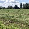 Un tracteur dans un champ de foin.