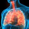 Illustration montrant le système respiratoire humain.