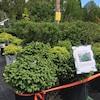 Des arbustes au magasin Jardin Scullion.