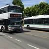 Deux autobus à Victoria, en Colombie-Britannique.