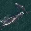Deux baleines nagent à la surface de la mer.