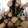 Des troncs d'arbres sont empilés.