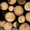 Des buches de bois.