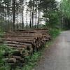 Un chemin forestier est bordé d'une corde de bois.