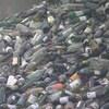 Un amoncellement de bouteilles de vins vides au recyclage