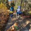 Des campeurs marchent dans un sentier avec un chien dans un parc.