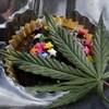 Un muffin au chocolat avec une feuille de cannabis.