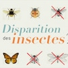 Disparition des insectes?