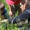 À la chasse aux insectes au Camp-École Chicobi