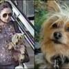 Photo d'une femme portant un chien en descendant des escaliers (à gauche) et photo d'un chien (à droite).
