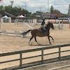 Un cavalier sur son cheval.