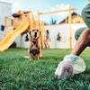 Une personne ramasse une crotte de chien dans une cour arrière, on voit un chien flou.