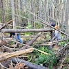 Des amas de branches et de troncs au sol dans une forêt de l'Île-du-Prince-Édouard