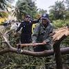 Des pompiers coupent des branches d'un arbre tombé en raison de la tempête.