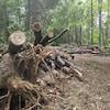 Des tas de troncs coupés le long d'un chemin.
