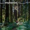 Un homme marche dans une forêt d'arbres géants. Image-titre du récit de la série Empreintes.