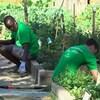 Des jeunes font du jardinage.