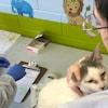 Un chat est manipulé par une femme alors qu'un homme remplit une fiche médicale.