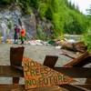 « Pas d'arbres, pas de futur », est-il écrit sur un panneau de bois.