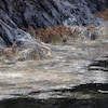 Des restes des saumons morts recouvrent des roches.