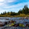 Une rivière avec une forêt en arrière-plan.
