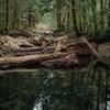 Un ruisseau et des arbres au coeur d'une forêt.