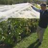 Le propriétaire du Domaine Girouard qui montre les raisins du vignoble.