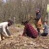 Des gens agenouillés sèment des légumes en terre.