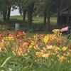 Des fleurs dans un domaine.