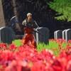 Un champ de coquelicots, des tombeaux et un personnage dans Fortnite.