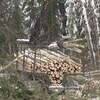 De la machinerie forestière déplace des troncs d'arbres coupés.
