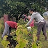 Des gens plantent des arbres dans une cour d'école.