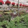 Des plants de légumes côtoient des plantes ornementales dans une serre.