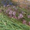 Les paniers de fleurs coupées sont préparés à la ferme.
