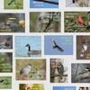 Mosaïque de photos d'oiseaux avec leur nom.