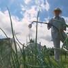 Andrée Deschênes du Jardin des Pèlerins est la première productrice à avoir utilisé le thé de compost au Québec.