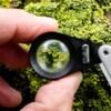 Un lichen sur un arbre vu à travers une loupe.