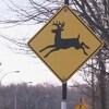 Un panneau routier indiquant la présence de chevreuils.