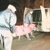 Des employés de la morgue transportent un corps.