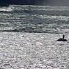 La silhouette de deux motomarines dans l'eau