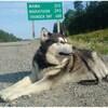 Un chien, laisse au cou, allongé au bord d'une route.