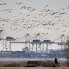 Des oiseaux en vol devant des infrastructures portuaires.