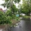 De nombreux arbres sont tombés dans les rues de Fredericton.
