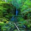 Une chute d'eau dans la forêt en été.