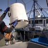 Deux hommes manipulent de l'équipement de pêche sur un bateau.