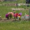 Des fleurs sur la pelouse près d'une croix blanche (archives).