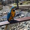 Un perroquet au plumage orange et turquoise perché sur une clôture dans un parc.