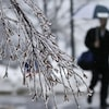 Les branches glacées d'un arbre avec en arrière-plan un homme qui marche.