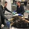 Deux aigles sont sur une table en métal et sont entourés d'équipement médical. Deux personnes ont l'air de les traiter.